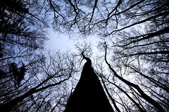 Surrounded by Trees (CoolMcFlash) Tags: wood sky tree ex nature silhouette forest canon eos austria sterreich pov branches natur perspective himmel sigma wideangle fisheye pointofview trunk tall ste wald bume niedersterreich perspektive gettyimages waldviertel 10mm weitwinkel baumstamm hoch eggenburg loweraustria blickwinkel fischauge umriss 60d