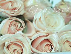 Gracias a tod@s ! - Thanks t@ all ! (Mariló Irimia) Tags: roses field garden nikon thankyou gracias jardin rosas ramo softtones pinkroses rosasrosas tonospastel psedition lightpinkroses tonossuaves pastelstones mygearandme marilóirimia marilóirimiafotografía musictomyeyeslevel1 ediciónps rosasrosassuave