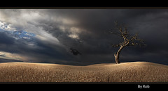 Into The Light (Robstorm Photography) Tags: old uk light england cloud storm black detail tree bird art beautiful beauty field rain digital photoshop sunrise work canon dark landscape dead dawn golden countryside big amazing fantastic twilight corn moody shropshire stitch artistic unitedkingdom dusk pano fineart flight harvest scenic stormy wallart panoramic photographic awsome fantasy stunning gb lone mystical british layers crow magical twisted multi enchanted dreamscape outstanding oswestry thegalaxy greatbriton 5dmark2 robstorm rememberthatmomentlevel4 flickrsfinestimages1 rememberthatmomentlevel2 rememberthatmomentlevel3 amazingscenics robstormphotography rememberthatmomentlevel5 rememberthatmomentlevel6 photoestitch