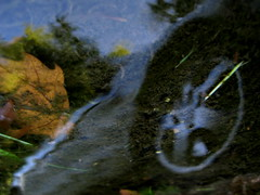 I told you already: Leaf the Car at Home! (andressolo) Tags: distortion reflection cars water car reflections
