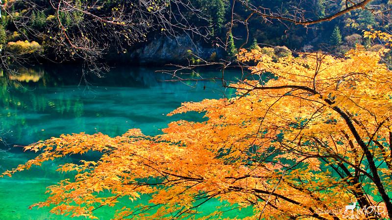 樹正群海IMG_0533
