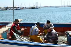 Trapani (Nele_Bieseman) Tags: sea italy fish boot boat fishing barca italia mare zee sicily vis vissen sicilia itali trapani pesce vissers sicili pescatori