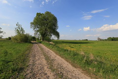 Dirt road (Pascal Volk) Tags: track path wideangle wa ww 16mm countrylane brandenburg naturepark countryroad dirttrack feldweg weg naturpark superwideangle sww uwa weitwinkel swa ultrawideangle havelland uww schutzgebiet protectedarea ultraweitwinkel superweitwinkel canonef1635mmf4lisusm agriculturalroad canoneos6d glpe havelaue westhavelland