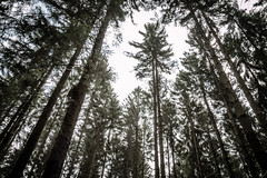#Look up (LaR0b) Tags: trees tree up look forest woods flickr lookup friday bos fort bois flickrfriday