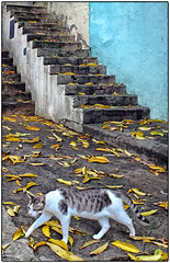 Gato, Escalera y Hojas (Cat, Stairs & Leaves) (SamyColor) Tags: color colors leaves yellow stairs canon hojas colores colori escaleras yellowleaves colorido canon50d tamron28mmf25adaptall2 hojasamarillas
