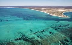 WA Coral Bay - 4634