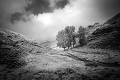 carve it. (jrseikaly) Tags: blackandwhite bw lebanon white black nature monochrome landscape ir jack photography outdoor infrared arz bnw cedars ariz seikaly jrseikaly