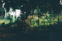 black dog (szmenazsfi) Tags: summer dog blur film analog 35mm garden outdoors bokeh blackdog ethereal mystical analogue smena smenasymbol