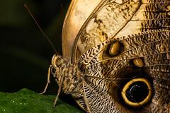 Owl (EugeneEverson) Tags: uk warrington victoriapark cheshire widnes butterflyhouse moorecameraclub