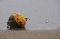 Buoy and Gulls - King's Lynn (Neil Pulling) Tags: river norfolk ouse eastanglia kingslynn greatouse buoyant