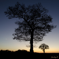 The Rise and Fall 2 (sparkeyb) Tags: sunset sky tree silhouette landscape nikon moonrise 18105mm d7000 assignment2011 sparkeyb