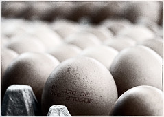 solid state protein capsules (marianna a.) Tags: food macro raw bokeh egg group monotone monochromatic whole round repetition desaturated dozen simple hmm wholesome mariannaarmata