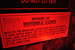 Invisible Cows