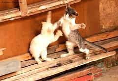 treta! (OBTURADORES) Tags: gato gata felino regicida