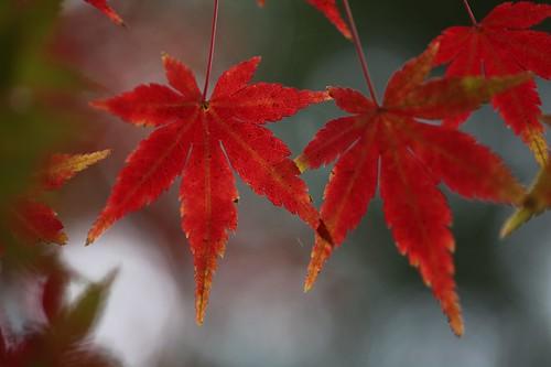 色づく葉 / Colored leaves