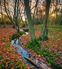 Stream (James Waghorn) Tags: light sunset england sky sun tree leaves countryside kent nikon stream sigma ultrawide hdr lightroom finegold sigma1020 d5000 blinkagain fineplatinum finediamond