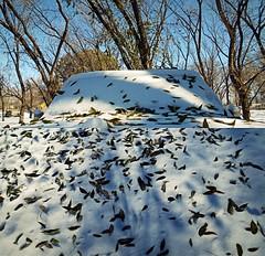 SnowCovered (Mattie & Den) Tags: newmexico flavor nm picnik lascruces mesilla southernnewmexico lascrucesnewmexico