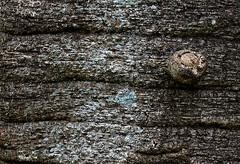 Bark (Deb Jones1) Tags: macro green nature beauty canon garden outdoors 1 jones flora explore deb flickrduel