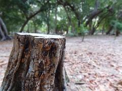 Um a menos (Geremias Bristot) Tags: tree green árvore devastação