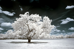 39 (mike.irwin) Tags: sky tree nature clouds landscape ir outdoors texas infrared wwwmikeirwinartcom
