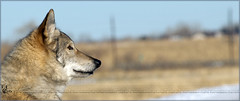 717: Love this place ( Eric Osmann) Tags: colorado denver evergreen dogpark offleash 2011 chatfieldstatepark olympuse5 ericosmann dec2011