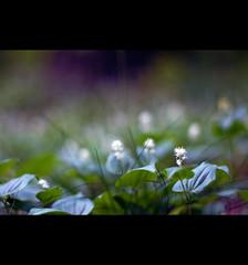 grün (~janne) Tags: nature 50mm flora f14 natur olympus wetzlar leitz janusz manuell summiluxr e520 ziob