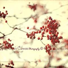 (Skowrron) Tags: tree texture vintage rowan twigs