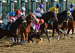 2011-12-13 (7) r5 and they're off (JLeeFleenor) Tags: horses ma caballo cheval photography photo photos uma racing jockeys gigi cavallo cavalo each kuda alogo hest thoroughbreds soos hevonen koin laurelpark  hst   ko faras   konj    pfeerd marylandracing