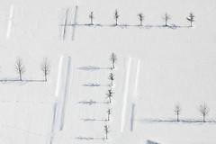 Horizontal & Vertical (Aerial Photography) Tags: schnee trees winter shadow snow tree by landscape mood aerial m rows plantation bume schatten baum deu rectangles luftbild leaftree luftaufnahme obb lineoftrees bayernbavaria deutschlandgermany reihen laubbaum deciduoustree ismaning baumreihe landschaftsarchitektur rowoftrees rechtecke baumpflanzung foliagetree fotoklausleidorfwwwleidorfde 16022010 1ds38168 unterfhringlkrmnchen