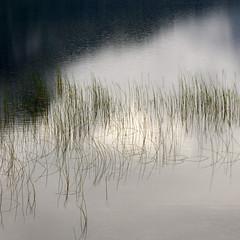 norl11339.jpg (keithlevit) Tags: reflection nature water grass norway outdoors day nopeople nordic scandinavia scenics tranquilscene granvin nonurbanscene squareimage hordalandcounty granvinsvatnet