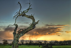 Sleepy Hollow (l.bailey_beverley) Tags: uk winter sunset england sky tree nature nikon december d200 westwood hdr beverley eastyorkshire 2011 photomatix treesubject