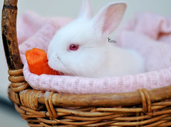 My Rabbit <3 (AL-anood Hamad   ) Tags: