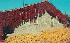 Chilies and Corn, New Mexico (jmlwinder) Tags: newmexico fall harvest nm picnik scannedpostcards