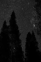 Starry Oregon Night (Blaze Williams) Tags: sky stars star nightsky starrynight starrynightsky