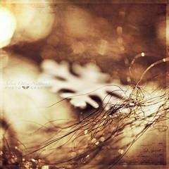 miracles (silviaON) Tags: xmas home december g decoration textured 2011 idream bsactions kimklassentextures