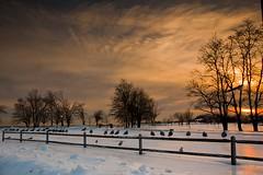 Take Off (Wassim Samara) Tags: trees winter sunset sky snow birds canon skies takeoff gettyimages sigma1020mm blinkagain