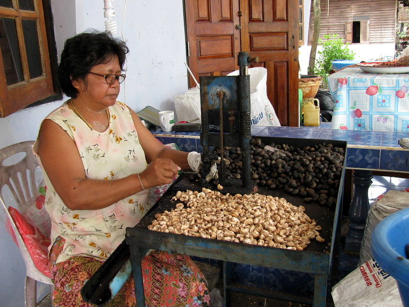 Lady removing the shells from cashew nuts
