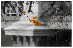As Fall Leaves (Usman Ghafoor Photo) Tags: fallleaves fall bostonma freedomtrail blankandwhite 70200mm orangeleaves canon7d usmanghafoorphoto