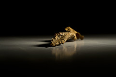Leaf in the limelight (Craig Nicolson) Tags: desktop contrast 35mm leaf nikon background low nikkor 18g