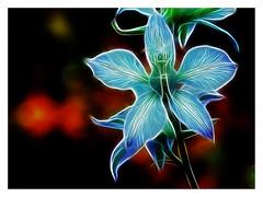 Lunaria Flower (Glenn Shoemake) Tags: flower art processed canonef100mmf28lmacroisusm