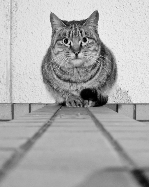 Today's Cat@2012-01-07