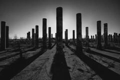 Pillars (Ebbs2) Tags: blackandwhite bw minnesota shadows pillars mn rosemount umorepark canon40d niksilverefexpro tamronspaf1024mmf3545diiildasphericalif