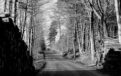 winterwoods (Henrik Bidstrup Jrgensen) Tags: wood trees tree woods olympus roads monocrome e510