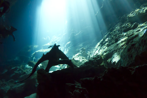 Guardian of the Ponderosa Cenote (driftwood)