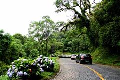 72385_TADEU NASCIMENTO_ESTRADA GRACIOSA PARANA (Tadeu_Nascimento) Tags: paraná água brasil natureza estrada curitiba neblina rios árvores flôres estradadagraciosa hortências tadeunascimento