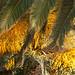 Palmen in Bosa