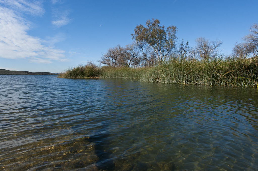 The world 39 s newest photos of fish and riversidecounty for Fish lake ca