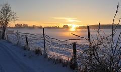 Winter - Landscape (Pana53) Tags: schnee winter sun snow sunshine fog landscape nikon nebel wintertime lneburgerheide sonnenschein haar winterlandschaft thefog nordheide thehaar pana53