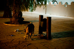 (Mikel_Oibar) Tags: chile southamerica desert atacama desierto sanpedro sanpedrodeatacama amricalatina desiertodeatacama sudamrica amricadelsur atacamadesert