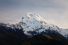 Annapurna South (7219m) (Michał Olszewski) Tags: nepal snow asia land himalayas acap tadapani gandaki kaski annapurnahimal annapurnaconservationarea annapurnaconservationareaproject annapurnasouth7219m